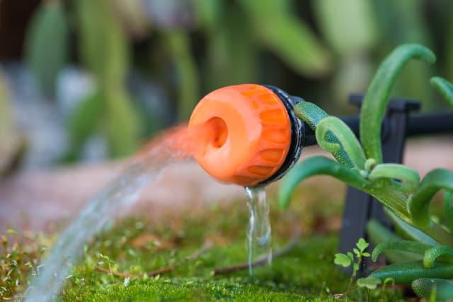 Come bagnare le piante quando si va in vacanza