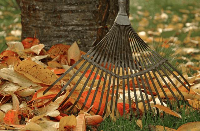 Come preparare le piante e il giardino per la stagione fredda