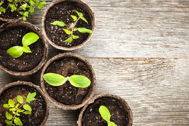 10 consigli pratici per avviare il giardino