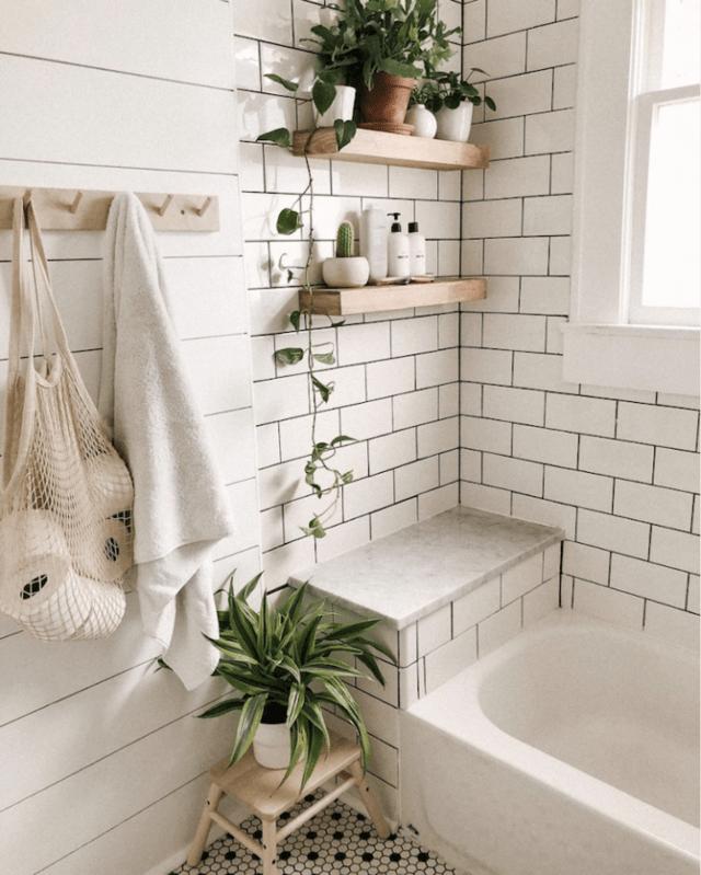 Le migliori piante per il bagno