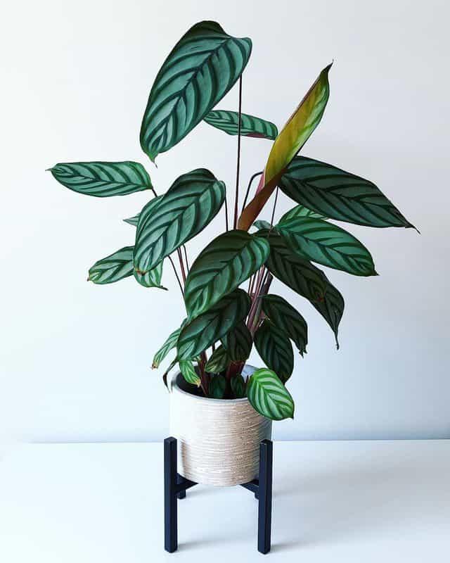 12 piante da interno per principianti