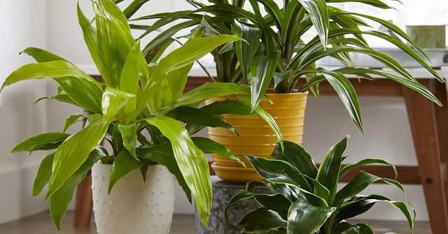 Guida alle piante da interno