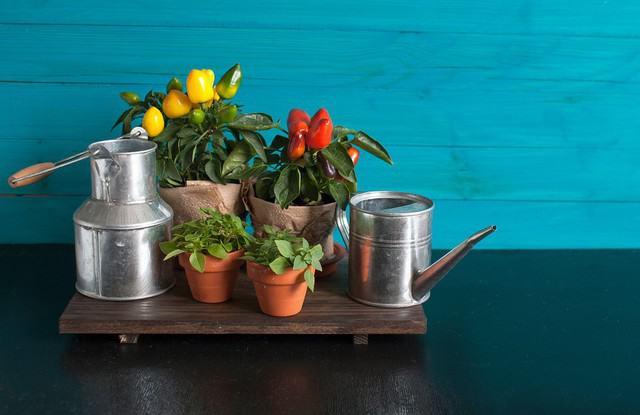 10 ortaggi da coltivare in piccoli spazi