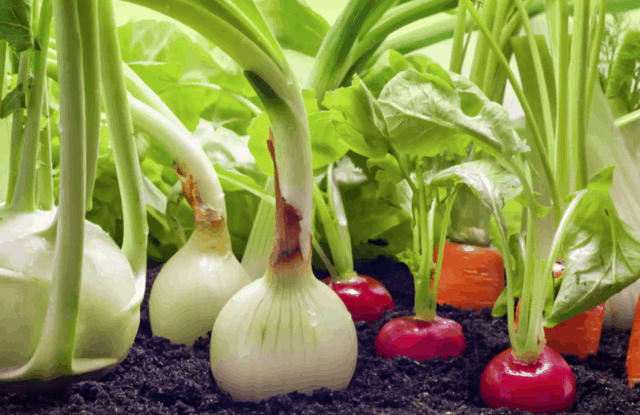 Come avere un orto sempre produttivo