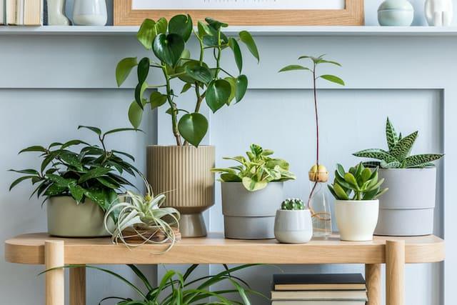 Le 9 migliori piante d'appartamento da coltivare a settembre
